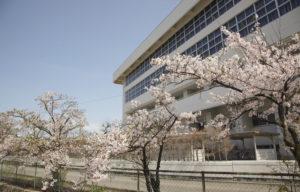 松任中学と桜2