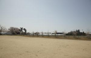松南グラウンド小さな桜の木々