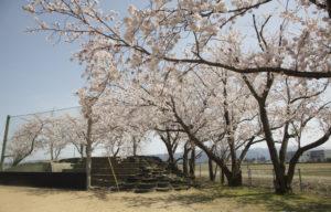松南グラウンド奥の桜と山