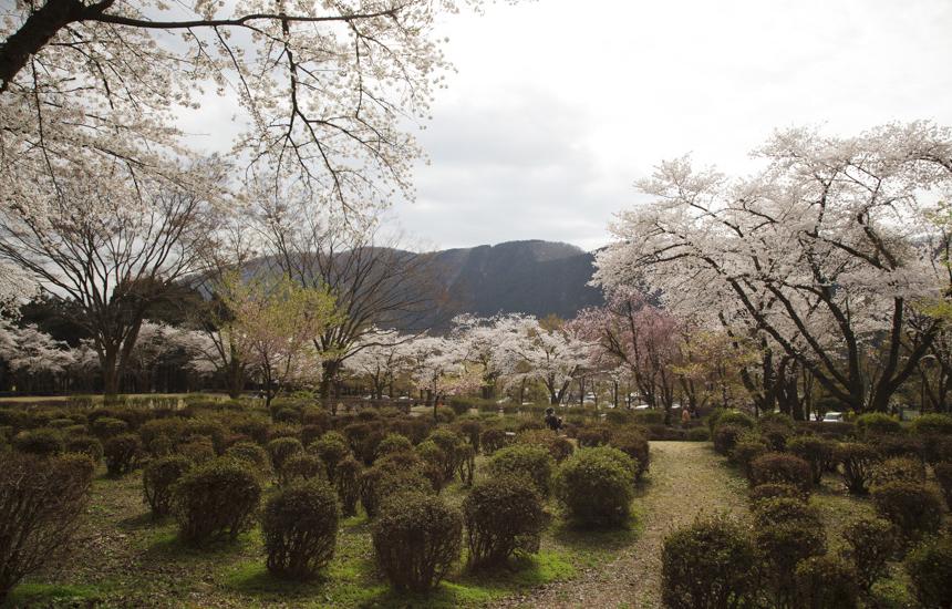 樹木公園の風景
