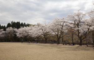 樹木公園芝生1