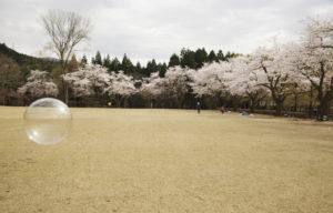 樹木公園芝生2