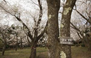 樹木公園の木1