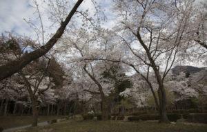 樹木公園の風景2