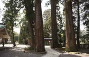白山比咩神社の木々