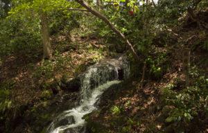白山比咩神社の滝