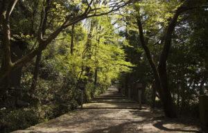 白山比咩神社裏の入り口からの絵