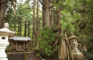 五十谷の大杉の神社内