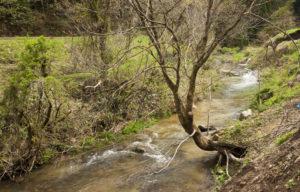 神子清水の川