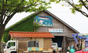 美川漁港 キトキト朝市