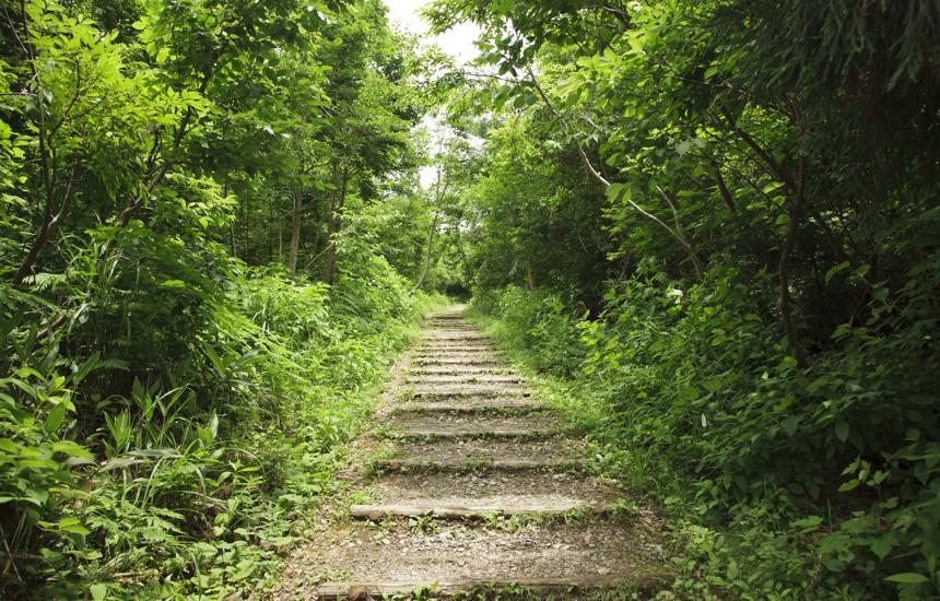 白山高山植物園までの階段
