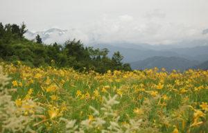 白山とお花畑