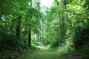 吉野園地 針葉樹林ゾーン
