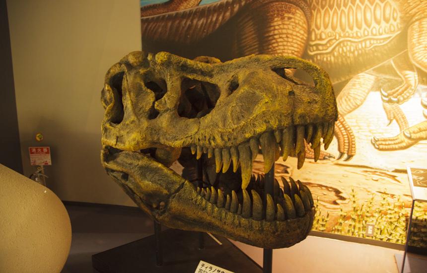 恐竜の顔の骨