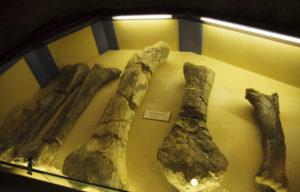 恐竜の大腿骨など