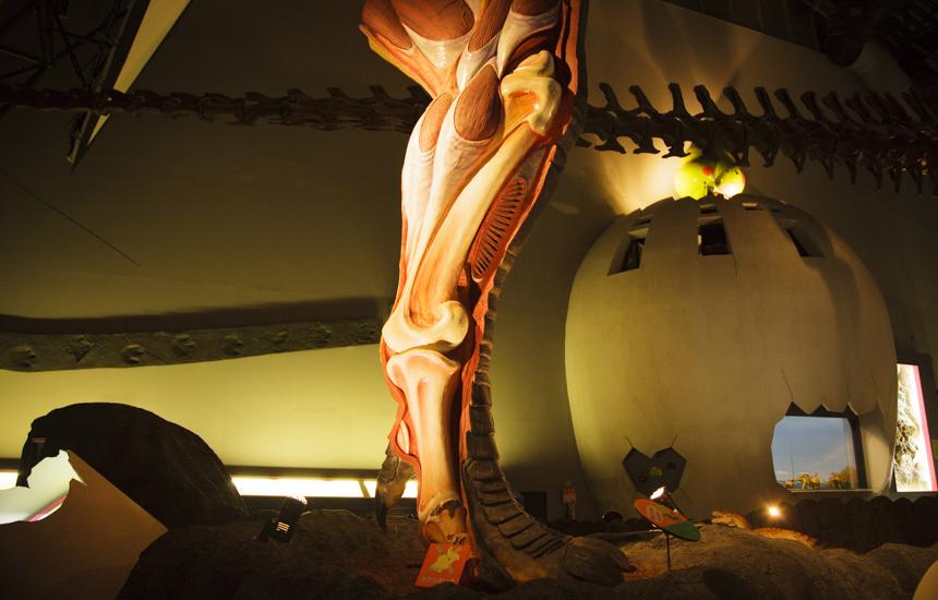 恐竜の足断面