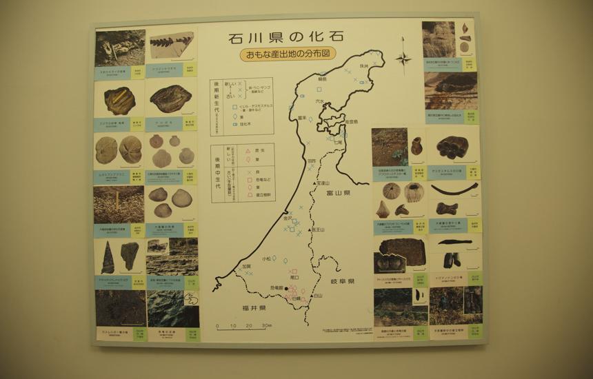 化石分布図