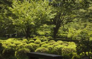 樹木公園3