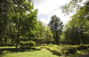 樹木公園2