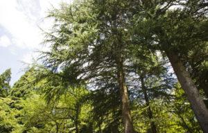 樹木公園1